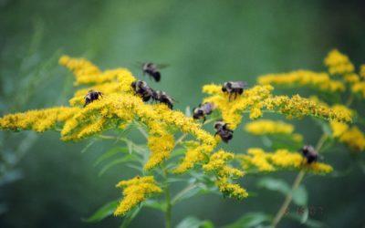 Pollinator Garden Giveaway!